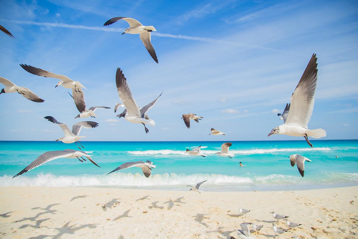 Birds fly above a beautiful beach.
