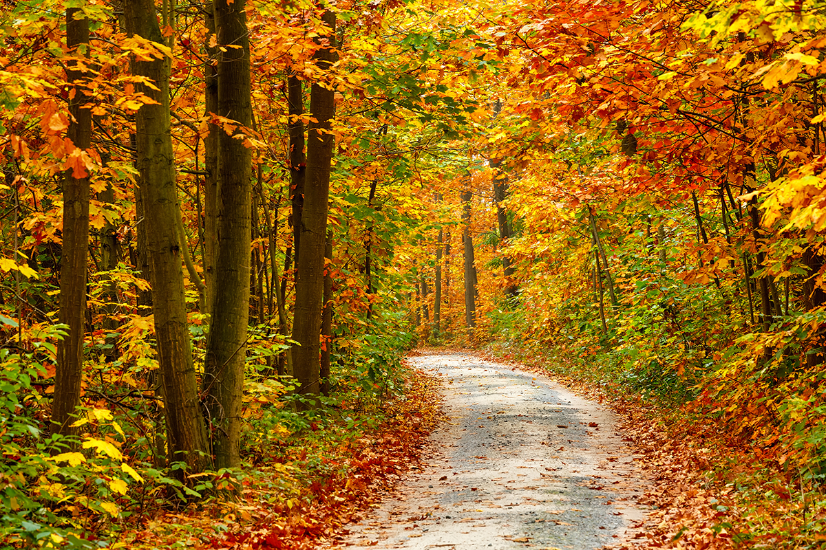 A vibrant scene shows an inviting pathway through an autumn forest.